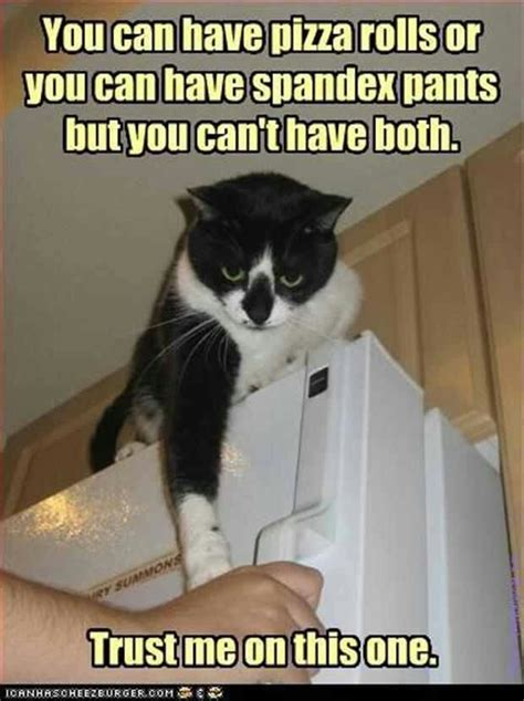 Cat Gym Meme - 17 best images about fitness humor workout jokes on pinterest
