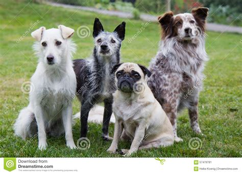 four dogs of four dogs stock image image of keen breed 57479781