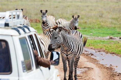best safari in kenya best of kenya safari big five maasai mara national