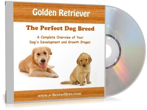 golden retriever stages of development golden retriever the breed audio books te