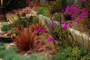 california xeriscape landscaping ideas colorful drought