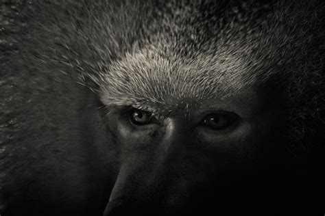 fotos en blanco y negro animales tremendas imagenes en blanco y negro de animales taringa