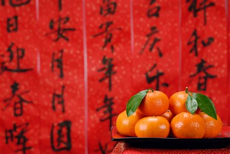 new year oranges and tangerines new year celebrate the year of the snake