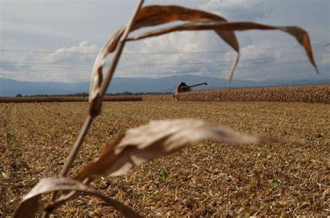 Comptoir Agricole Hochfelden by Une Cagne Difficile Et Morose Est Agricole