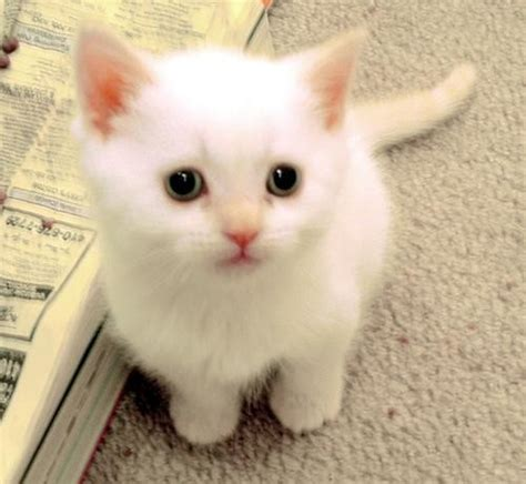 Tshirt Kucing Lucu by Kucing Lucu Dan Menggemaskan
