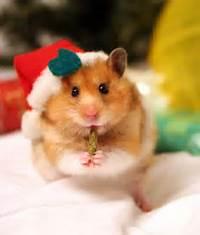 Animal Tails  Merry Christmas