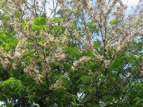 the cherry tree paperblog
