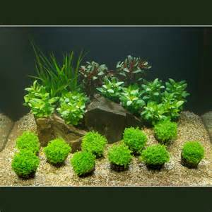 aquarium plants that grow on rocks aquarium plant set 60