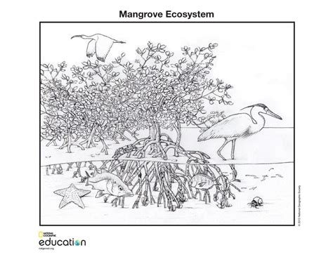 Mangrove Ecosystem National Geographic Education Ecosystem Coloring Pages