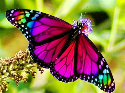 butterfly colors rainbow butterfly clipart multi coloured pencil and in