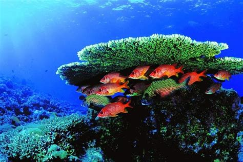 Cd Around The World Philippines Malaysia diving tourism malaysia