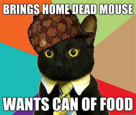 Mouse Memes - brings home dead mouse wants can of food scumbag cat