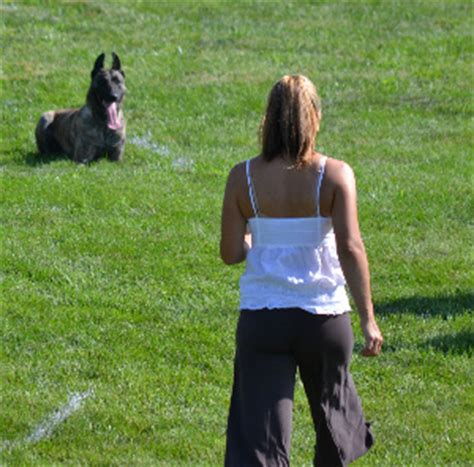 best dogs for single best for single living alone breeds picture