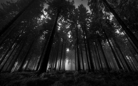 black and white woodland wallpaper dark woods wallpapers wallpaper cave