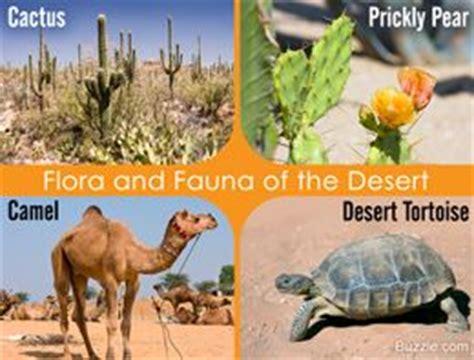 tropical desert animals and plants 25 best ideas about desert biome on desert