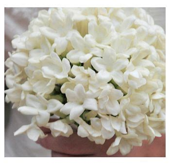 Flowers Used In Wedding Bouquets by 1000 Images About Stephanotis On