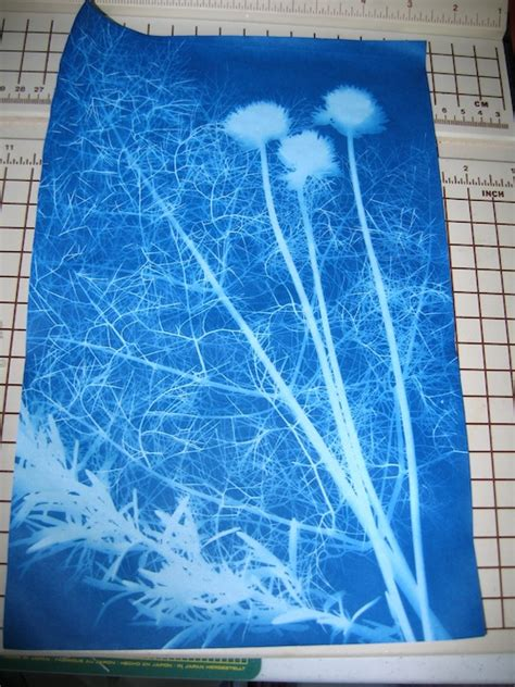 How To Make Cyanotype Paper - in the sun printing bloom bake createbloom bake