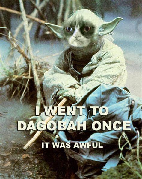 Star Wars Cat Meme - darth yoda memes