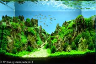 Fish Tank Aquascape 2013 Aga Aquascaping Contest Entry 174