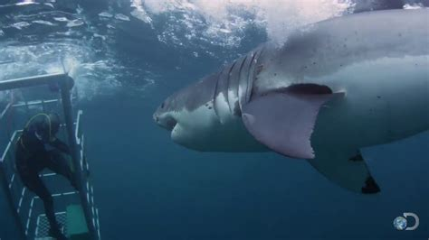 great white shark attacks cage 18 foot shark attacks cage great white serial killer doovi