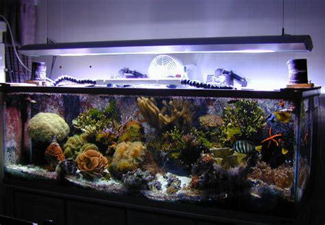 power compact reef lighting power compact aquarium lighting 1000 aquarium ideas