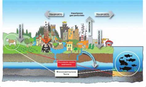 catena alimentare definizione inquinamento si dice diossina o diossine focus it