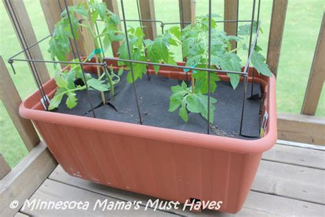 Tomato Planters On Wheels by How To Grow Patio Tomatoes Must