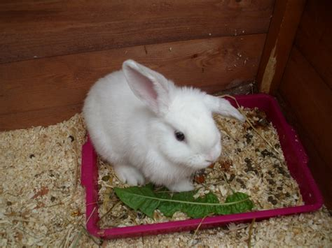 house training a rabbit house training a rabbit house plan 2017