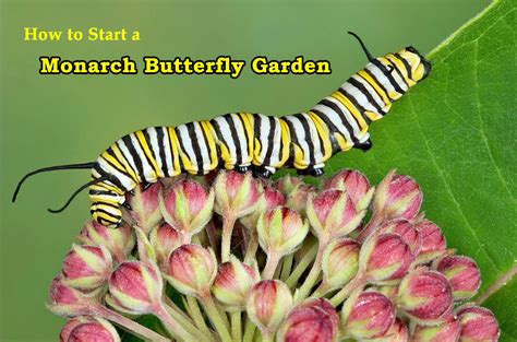 design home how to start over how to start a monarch butterfly garden at home