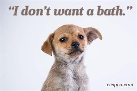 puppy captions puppy caption quot i don t want a bath quot central california spca fresno ca