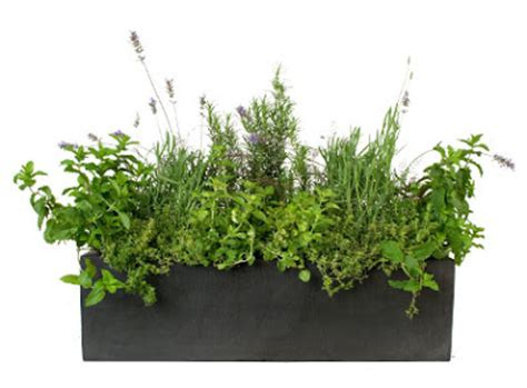 herb window box window box ideas