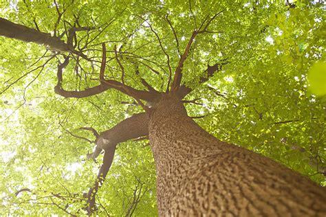 Home Design Videos by Natur Roman Thomas Fotografie Fotograf Polaroid