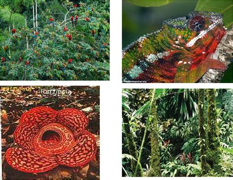 plants found in the tropical rainforest biome edtech