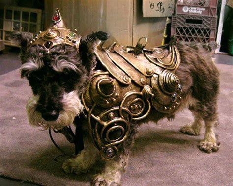 armour dogs armour so soooooo sooo much
