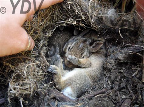 Baby Nest Bunny Blue that was kinda dickish