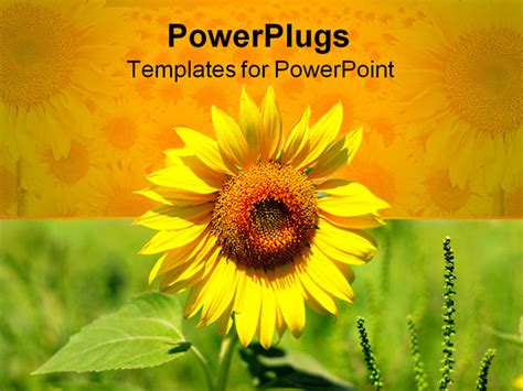 powerpoint template beautiful yellow sun flower on yellow