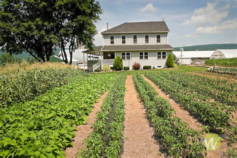 amish farm  vegetable garden sugar valley pa terry