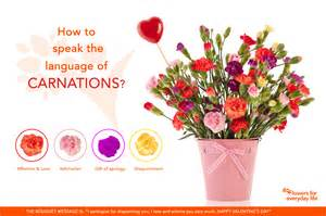 carnation color meanings carnations for s day learn their secret