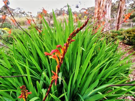 wittunga botanic garden wittunga botanic garden adelaide