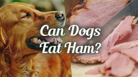 dogs ham can i give my ham pet consider