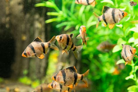 Are your tropical fish stressed?   Pets4Homes