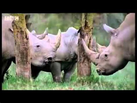 african mating ritualsvideos matingrituals