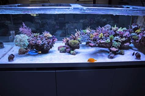 Reef Aquarium Aquascaping by Show Your Large Tank Aquascape Page 17
