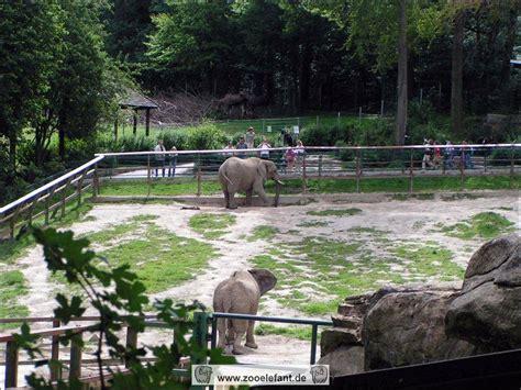 zooelefant de opel zoo kronberg