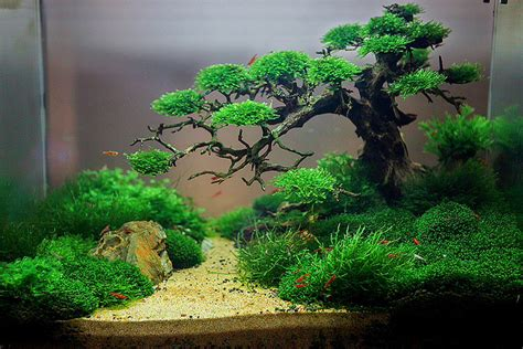 Freshwater Aquascaping Ideas by Aquascape Idea 32 Meowlogy