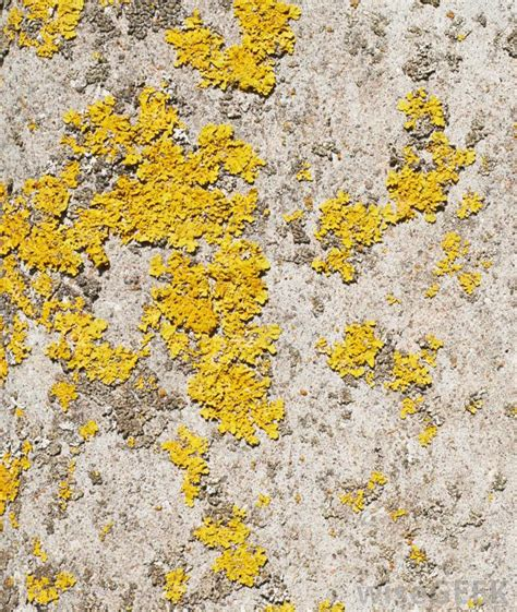 Yellow Mold On Bathroom Ceiling by Yellow Mold On Walls Www Pixshark Images Galleries With A Bite