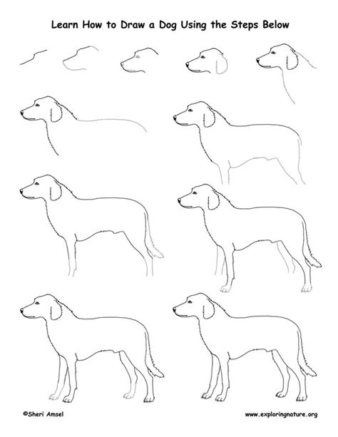 how to pet dogs drawing lesson