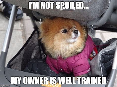 Dog Owner Meme - bad dog owner memes pictures to pin on pinterest pinsdaddy