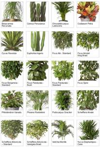House Plan Names indoor tropical plants