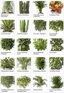 Tropical Foliage Indoor Plants - indoor tropical plants